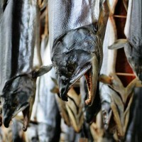 塩引き鮭、郷土料理のすばらしさを見直しました